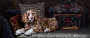 dog-portrait1