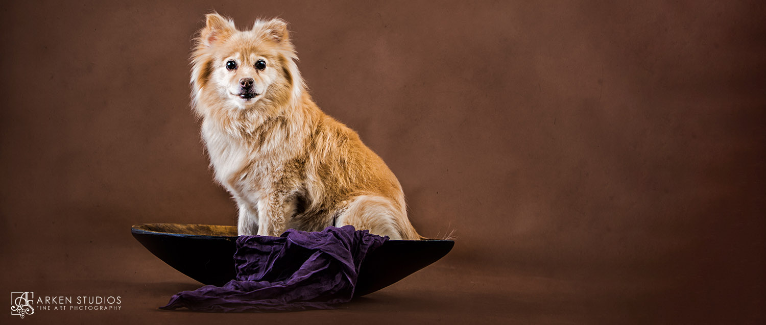 Sonoma County Dog Photography